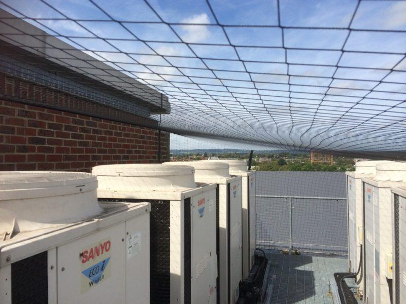 Bird Control Company In Kent